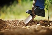 Digging spring soil with shovel. Close-up, shallow DOF.