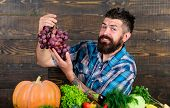 Vegetables Organic Harvest. Farming Concept. Grapes From Own Garden. Farmer Bearded Guy With Homegro poster