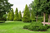 Garden With Meadow And Lawn And Planted Coniferous Evergreen Plants In The Form Of Bushes And Hedges poster