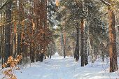 Nature, Landscape, Walking Concept-beautiful Winter Landscape With Snow-covered Trees Under Sunlight poster