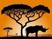 Savannah - rhino.