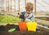 Son In Greenhouse. Little Son Play With Soil. Greenhouse Concept. Son Working In Greenhouse. Small S poster
