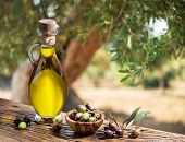 Bottle of olive oil and olive berries are on the wooden table under the olive tree. poster