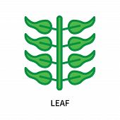 Leaf Icon Isolated On White Background. Leaf Icon Simple Sign. Leaf Icon Trendy And Modern Symbol Fo poster
