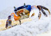 O caranguejo na areia