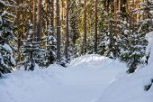 Winter Forest By A Cold Sunny Day.mountain Landscape With A Footpath. Sunny Day And Frosty Weather.s poster