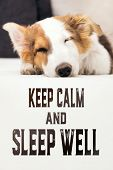 Cute Mixed-breed Puppy Dog Sleeping On The Couch, English Text Keep Calm And Sleep Well poster