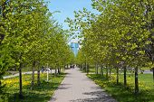picture of sankt-peterburg  - foot avenue in the spring Sankt - JPG