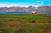 Iceland Red House In The Meadow With A Horse, Mountain Background