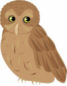 picture of screech-owl  - An illustration of a  brown screech owl - JPG