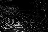 Spider Web With Dew Drops Isolated On Black