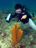 Dive Master Pointing At A Sea Sponge