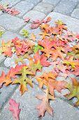 Fallen Oak Leaves On Paver Brick Patio