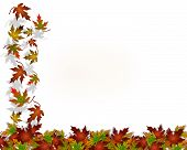 Thanksgiving Autumn Fall Leaves Background