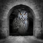 The evil eyes in the vault window. ( Eagle Owl, Bubo bubo). Halloween theme.