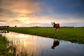 Red Cow By River At Sunset