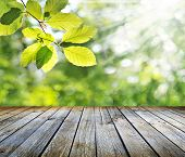 stock photo of vegetation  - Empty table for Your photomontage or product display - JPG