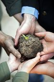 group of hands holding clod of earth with plant