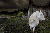 white horse among ruins