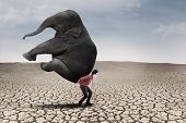 Businessman Bring Elephant On Dry Ground - Leadership Concept