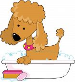 picture of bath tub  - Cute apricot poodle in a bath tub - JPG