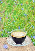 foto of substitutes  - diet hot drink chicory is coffee substitutes - JPG