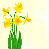 stock photo of perfume  - Vector card with daffodils on textured background - JPG