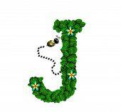 Alphabet Bee Buzz J