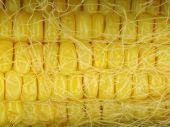 Closeup of corn cop