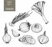 Onion. Set of illustrations