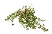 Sprigs Of Aromatic Freshly Grown Garden Thyme