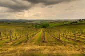The Tuscan Vineyards