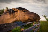 foto of feeding horse  - Grazing Horse behind the Fence at Sunset - JPG