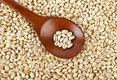 pearl barley grains in a wooden spoon close up  surface top view background