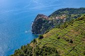 Small village on the cliff and terraced vineyards on downhill with view on Mediterranean sea in Ital