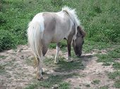White and Grey Pony