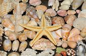 Sea Star And Various Shells
