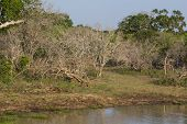 Safai In The Yala Nationalpark
