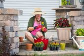 Senior Lady Potting Up Plants In Flowerpots