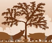 Editable vector illustration of free-range pigs feeding under an apple tree with all figures as sepa