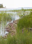 Midsummer Landscape. Rocky Beach, Fresh Green Reeds And Horizon
