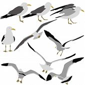 Set black silhouettes of seagulls on white background.