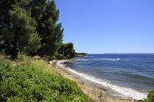 Beautiful coast of the Aegean Sea with pine trees.