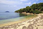 Wild sandy beach in the bay of the Aegean Sea.