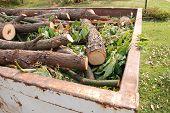 Firewood In Skip