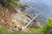 Dried up dead tree on the stone coast of the Aegean Sea.