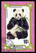 Vintage  Postage Stamp. Eating Bamboo, Giant Pandas.