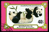 Vintage  Postage Stamp. Male And Cub Pandas.