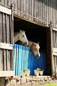 Two old retired horses