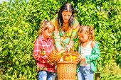 Mother and her Daughters picking clementines